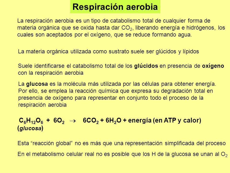 La respiración aerobia es un tipo de catabolismo total de cualquier forma de materia orgánica que se oxida hasta dar CO 2, liberando energía e hidróge