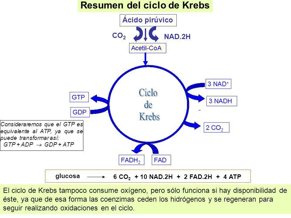 glucosa 6 CO 2 + 10 NAD.2H + 2 FAD.2H + 4 ATP Resumen del ciclo de Krebs El ciclo de Krebs tampoco consume oxígeno, pero sólo funciona si hay disponib
