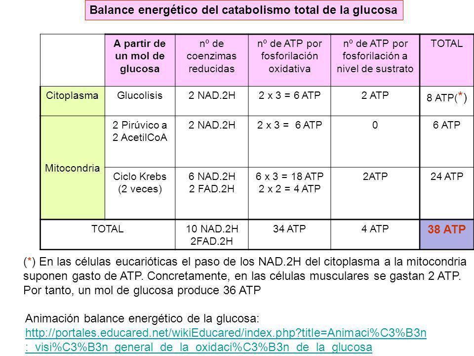 A partir de un mol de glucosa nº de coenzimas reducidas nº de ATP por fosforilación oxidativa nº de ATP por fosforilación a nivel de sustrato TOTAL Ci