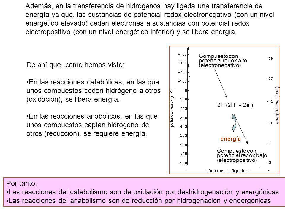 Además, en la transferencia de hidrógenos hay ligada una transferencia de energía ya que, las sustancias de potencial redox electronegativo (con un ni