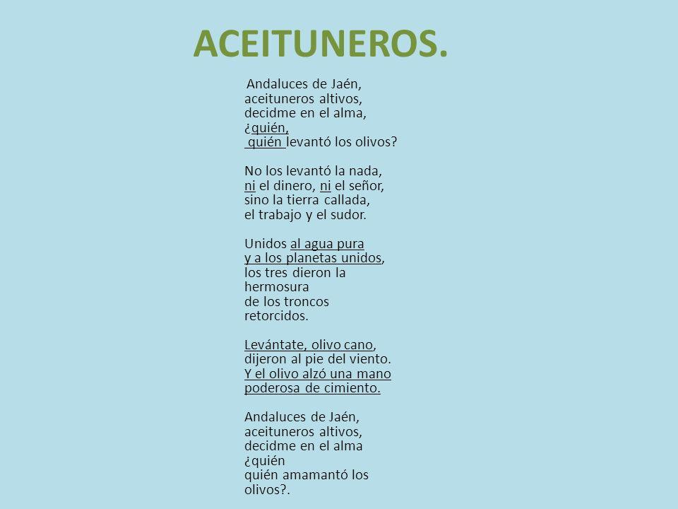 ACEITUNEROS. Andaluces de Jaén, aceituneros altivos, decidme en el alma, ¿quién, quién levantó los olivos? No los levantó la nada, ni el dinero, ni el