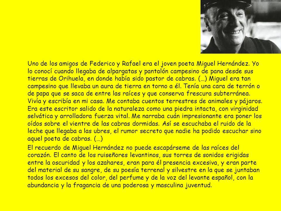 Uno de los amigos de Federico y Rafael era el joven poeta Miguel Hernández. Yo lo conocí cuando llegaba de alpargatas y pantalón campesino de pana des