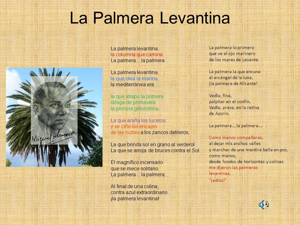 La Palmera Levantina La palmera lo primero que ve el ojo marinero de los mares de Levante. La palmera la que encuna al arcángel de la luna, ¡la palmer