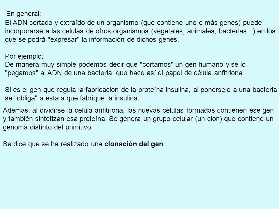 La transferencia de genes, tiene una doble finalidad: 1.Obtención de individuos transgénicos.