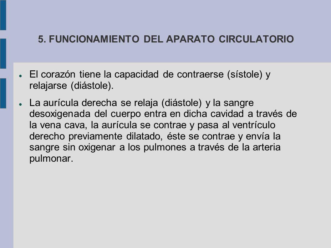 5. FUNCIONAMIENTO DEL APARATO CIRCULATORIO El corazón tiene la capacidad de contraerse (sístole) y relajarse (diástole). La aurícula derecha se relaja