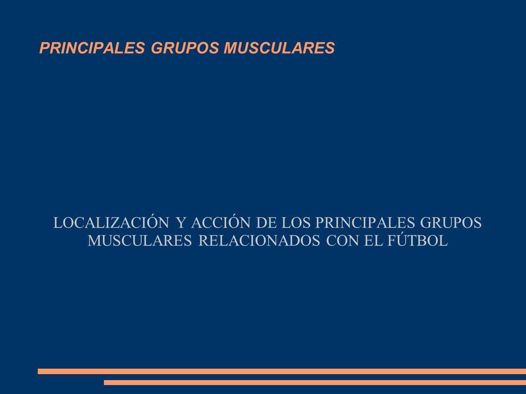 PRINCIPALES GRUPOS MUSCULARES LOCALIZACIÓN Y ACCIÓN DE LOS PRINCIPALES GRUPOS MUSCULARES RELACIONADOS CON EL FÚTBOL