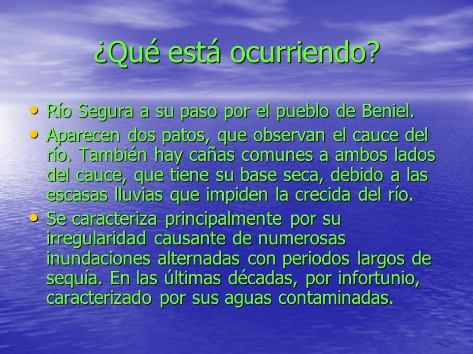 ¿Qué está ocurriendo. Río Segura a su paso por el pueblo de Beniel.