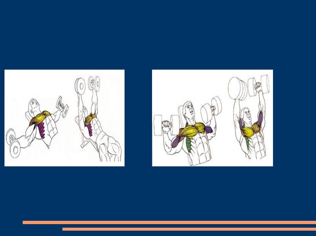 Esta acción produce gran presión en los discos intervertebrales con riesgo de protusión hacia detrás.