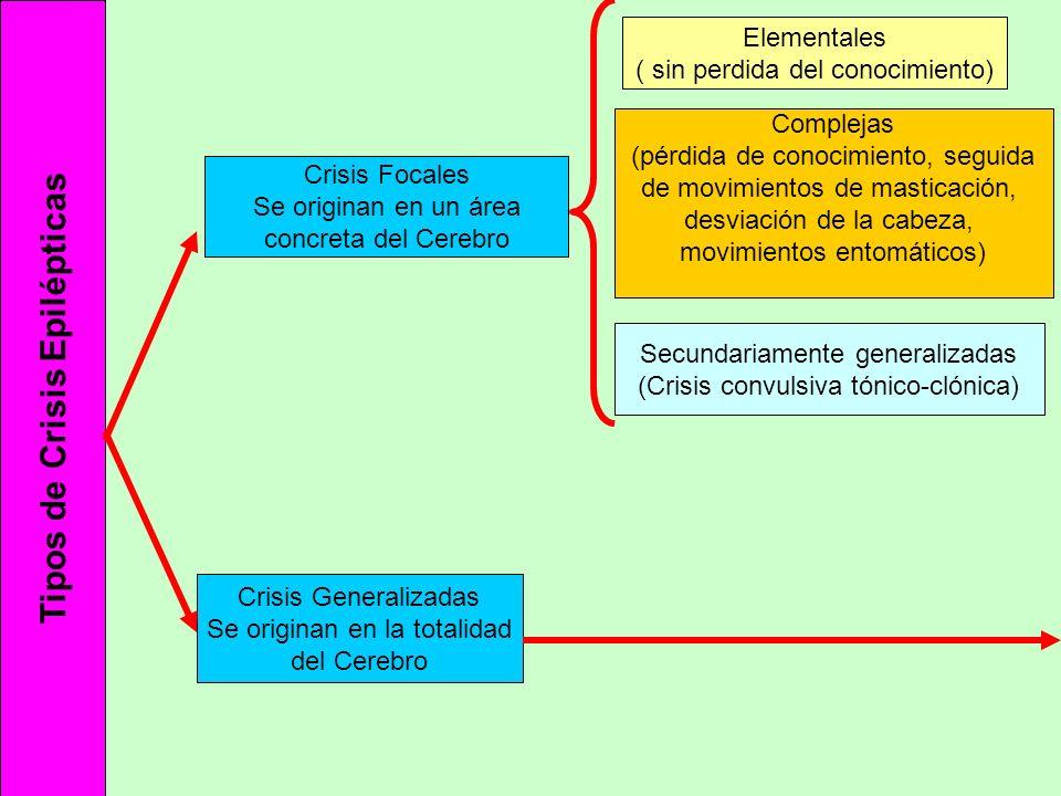 Tipos de Crisis Epilépticas Crisis Focales Se originan en un área concreta del Cerebro Crisis Generalizadas Se originan en la totalidad del Cerebro El