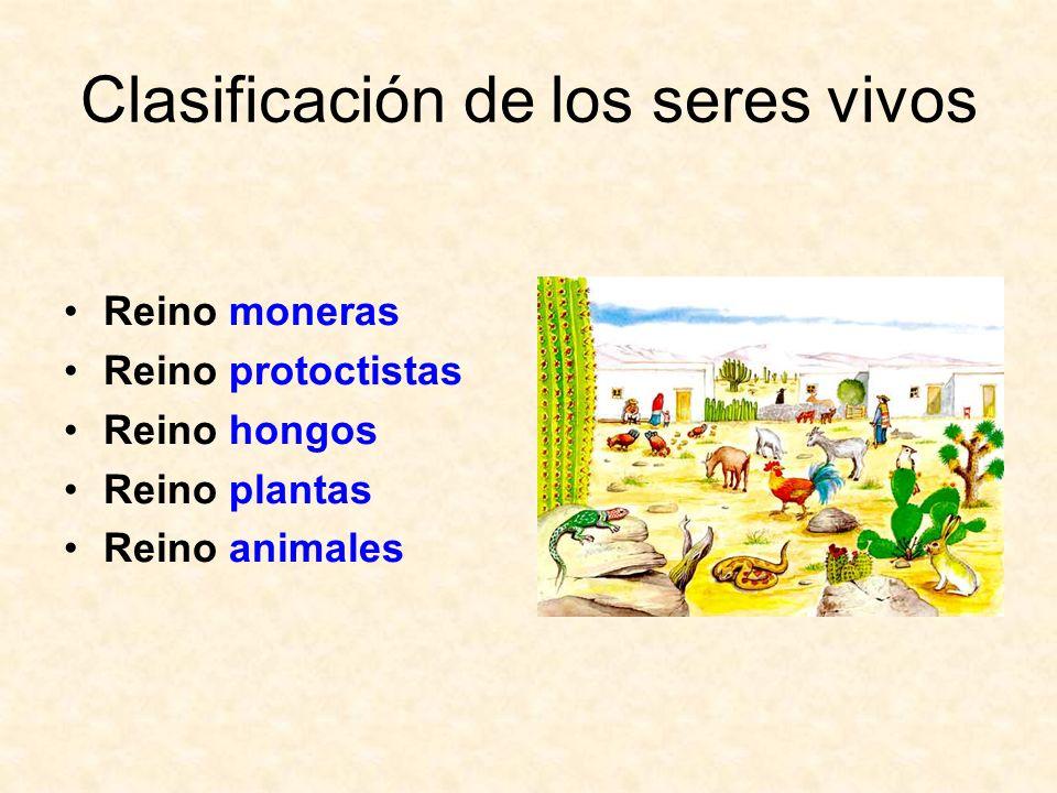 Clasificación de los seres vivos Reino moneras Reino protoctistas Reino hongos Reino plantas Reino animales