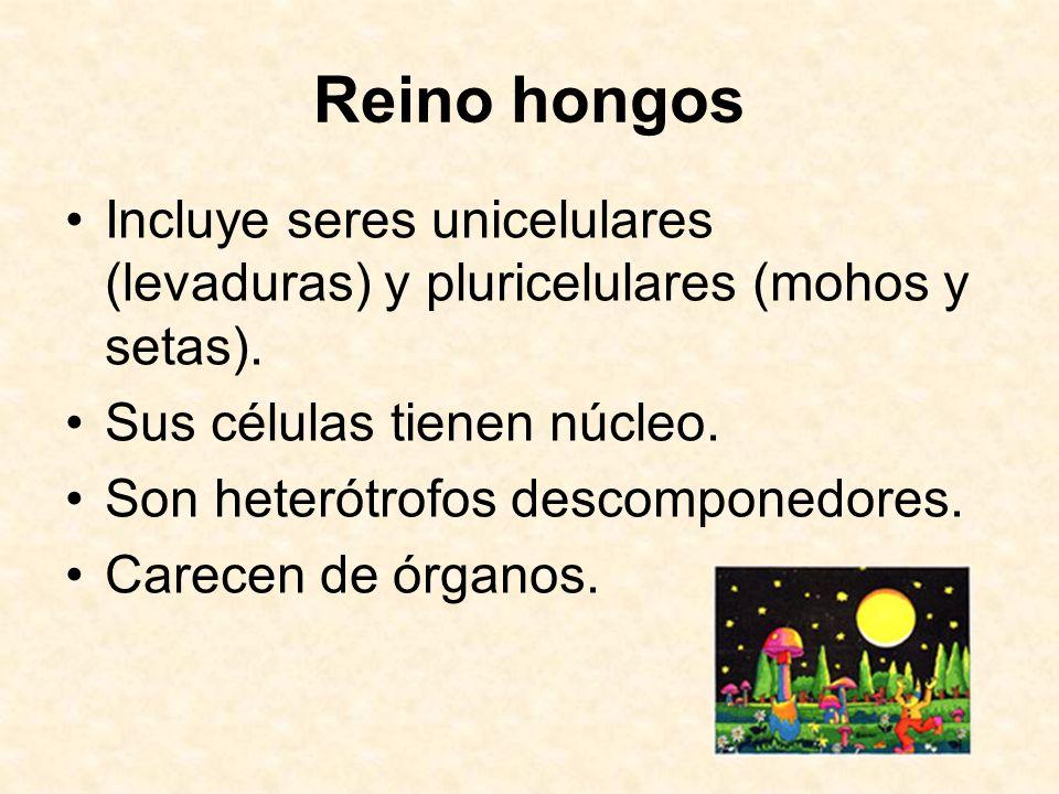 Reino hongos Incluye seres unicelulares (levaduras) y pluricelulares (mohos y setas). Sus células tienen núcleo. Son heterótrofos descomponedores. Car