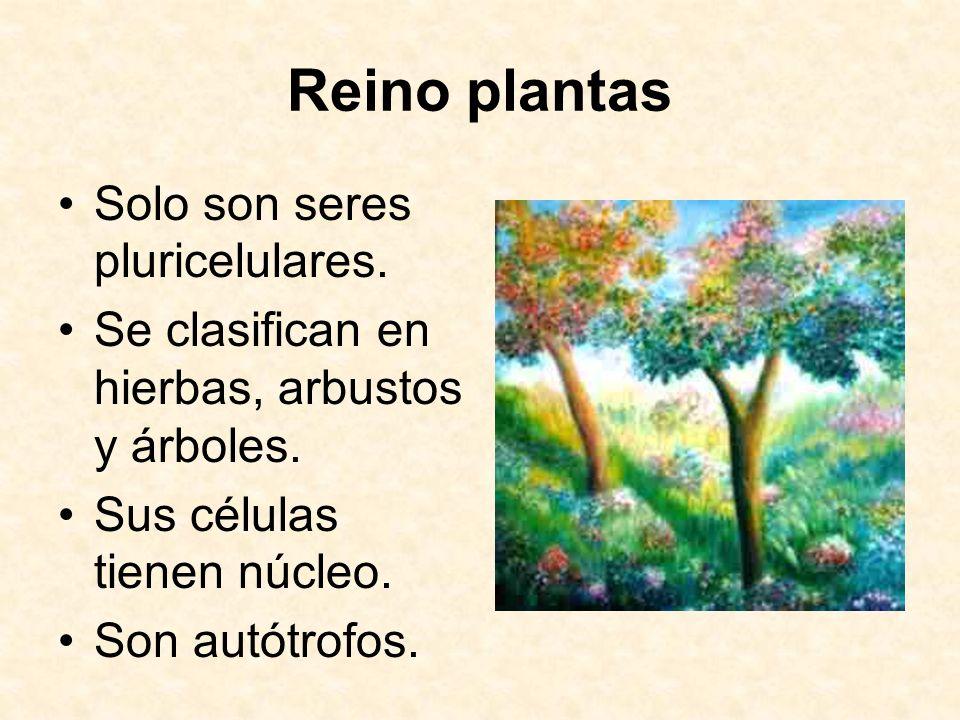 Reino plantas Solo son seres pluricelulares. Se clasifican en hierbas, arbustos y árboles. Sus células tienen núcleo. Son autótrofos.