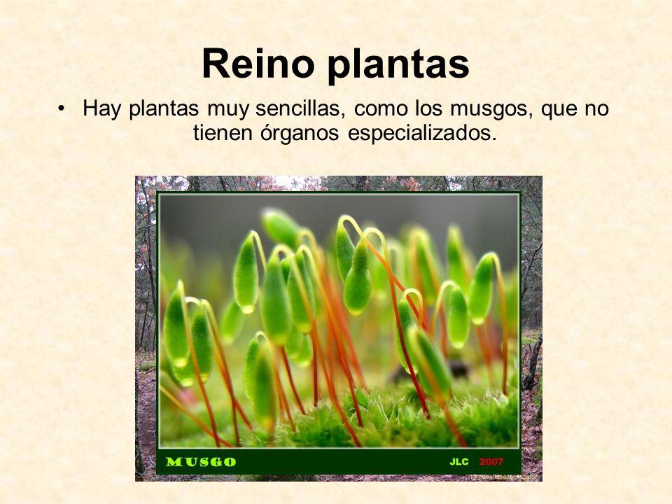 Reino plantas Hay plantas muy sencillas, como los musgos, que no tienen órganos especializados.
