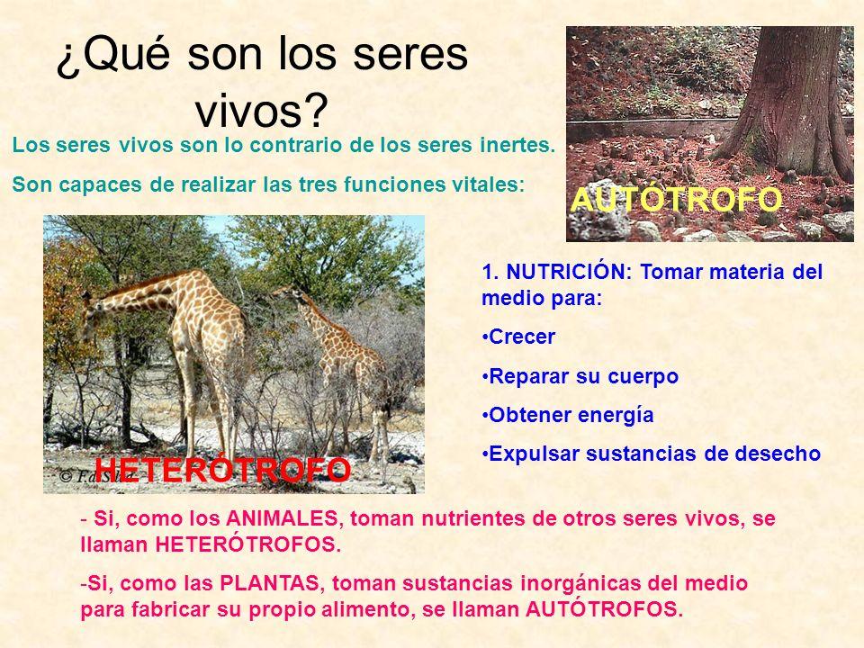 Clasificación de las plantas ESPERMATOFITAS son el resto de las plantas.