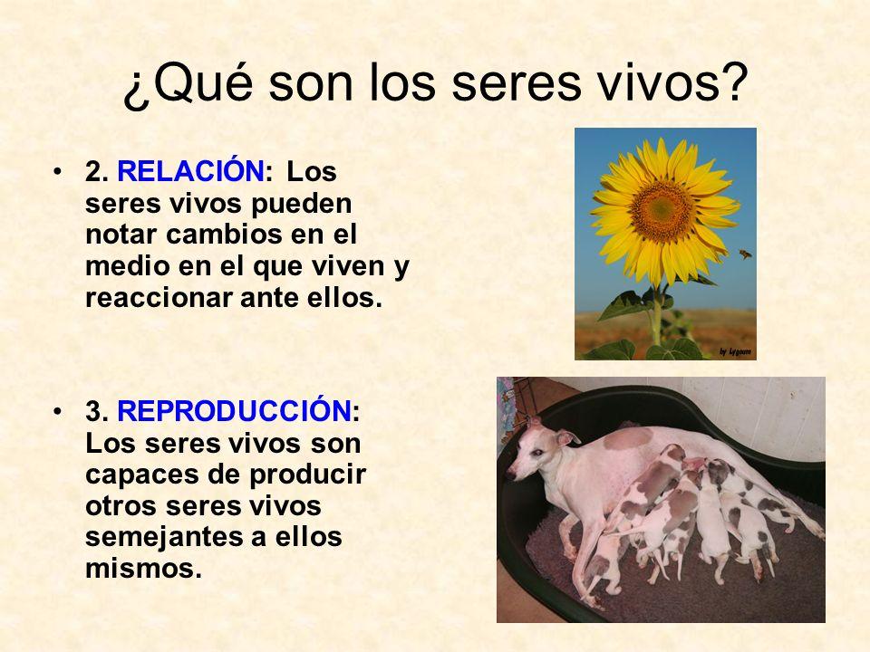 ¿Qué son los seres vivos? 2. RELACIÓN: Los seres vivos pueden notar cambios en el medio en el que viven y reaccionar ante ellos. 3. REPRODUCCIÓN: Los