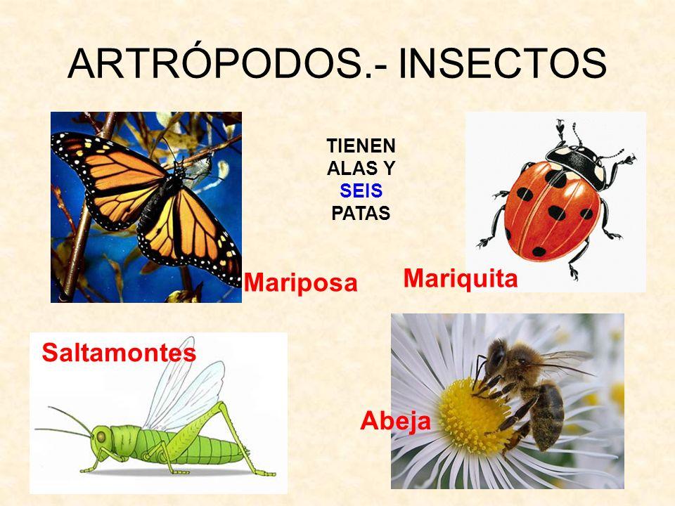 ARTRÓPODOS.- INSECTOS TIENEN ALAS Y SEIS PATAS Abeja Mariquita Saltamontes Mariposa