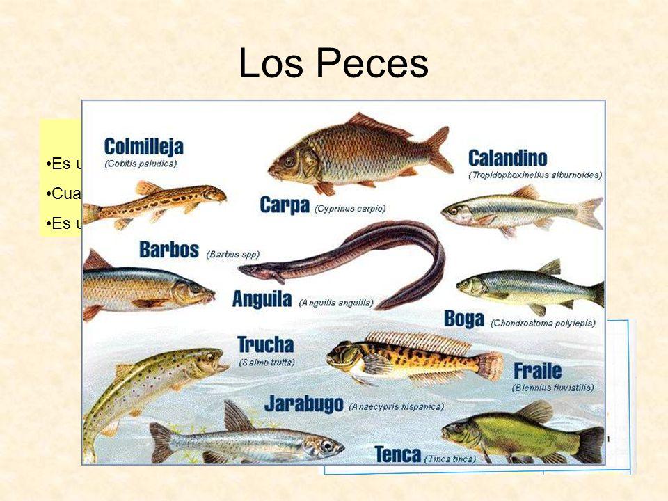 Los Peces La merluza Es un pez de agua salada y es carnívoro. Cuando es joven se llama pescadilla. Es un alimento muy apreciado.