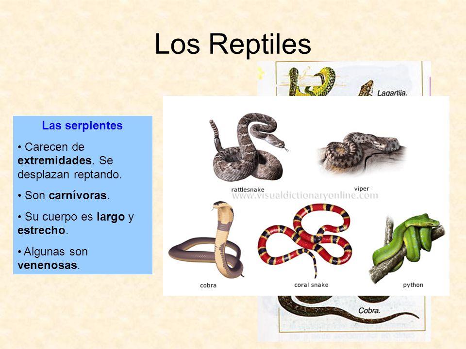 Los Reptiles Las serpientes Carecen de extremidades. Se desplazan reptando. Son carnívoras. Su cuerpo es largo y estrecho. Algunas son venenosas.