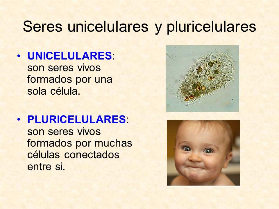 Seres unicelulares y pluricelulares UNICELULARES: son seres vivos formados por una sola célula. PLURICELULARES: son seres vivos formados por muchas cé