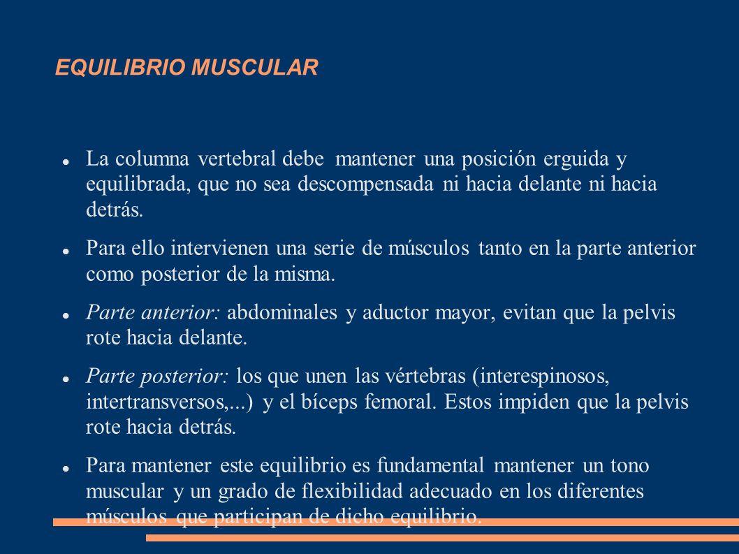 EQUILIBRIO MUSCULAR La columna vertebral debe mantener una posición erguida y equilibrada, que no sea descompensada ni hacia delante ni hacia detrás.