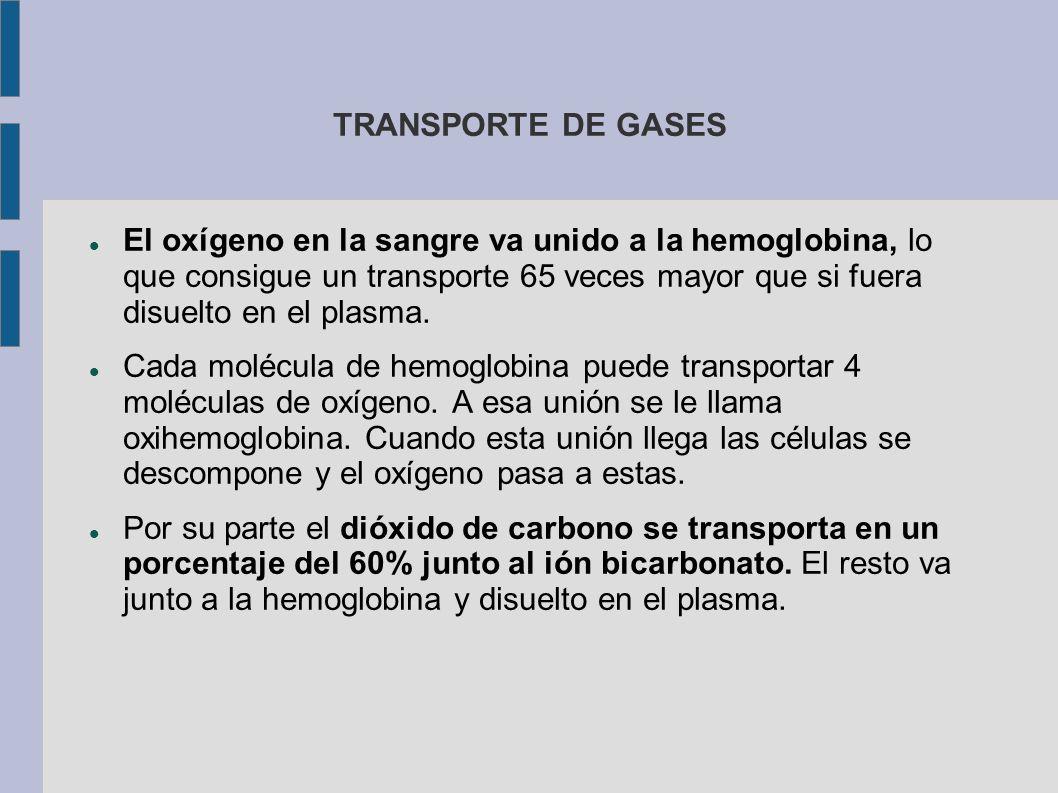 TRANSPORTE DE GASES El oxígeno en la sangre va unido a la hemoglobina, lo que consigue un transporte 65 veces mayor que si fuera disuelto en el plasma