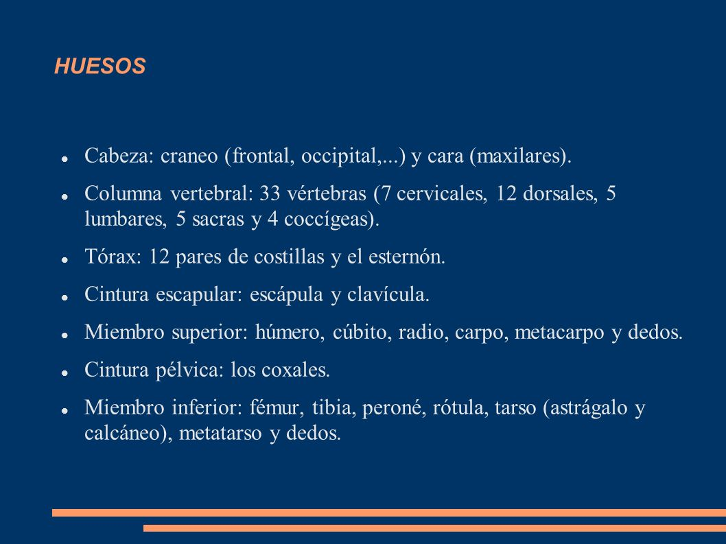 HUESOS Cabeza: craneo (frontal, occipital,...) y cara (maxilares). Columna vertebral: 33 vértebras (7 cervicales, 12 dorsales, 5 lumbares, 5 sacras y