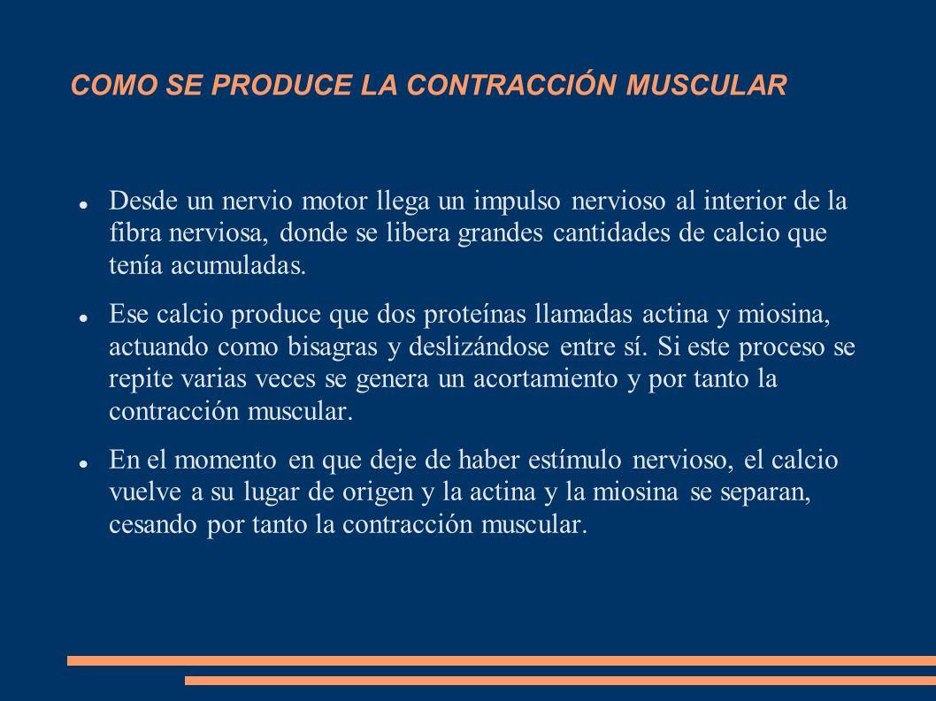 Para los procesos de contracción y relajación se necesita energía.