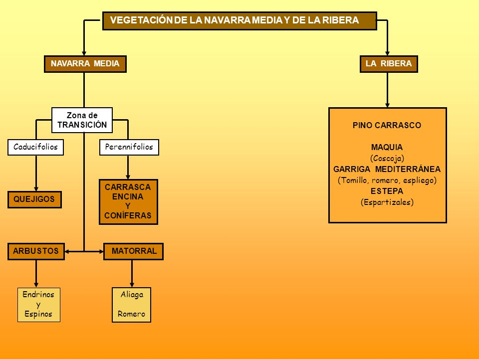 VEGETACIÓN DE LA NAVARRA MEDIA Y DE LA RIBERA NAVARRA MEDIALA RIBERA Zona de TRANSICIÓN CaducifoliosPerennifolios QUEJIGOS CARRASCA ENCINA Y CONÍFERAS
