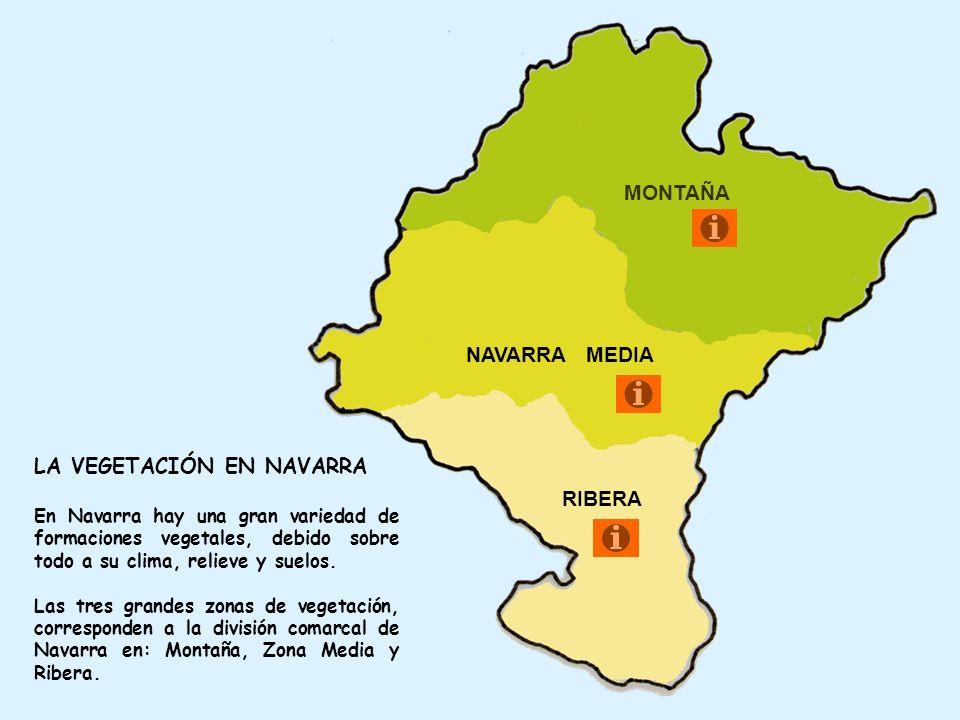 MONTAÑA NAVARRA MEDIA RIBERA LA VEGETACIÓN EN NAVARRA En Navarra hay una gran variedad de formaciones vegetales, debido sobre todo a su clima, relieve