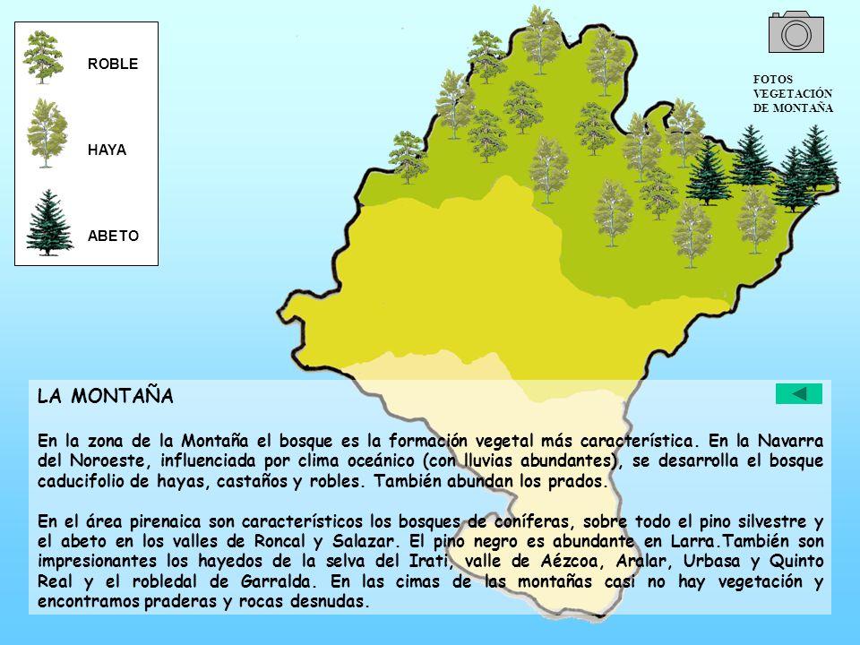 LA MONTAÑA En la zona de la Montaña el bosque es la formación vegetal más característica. En la Navarra del Noroeste, influenciada por clima oceánico