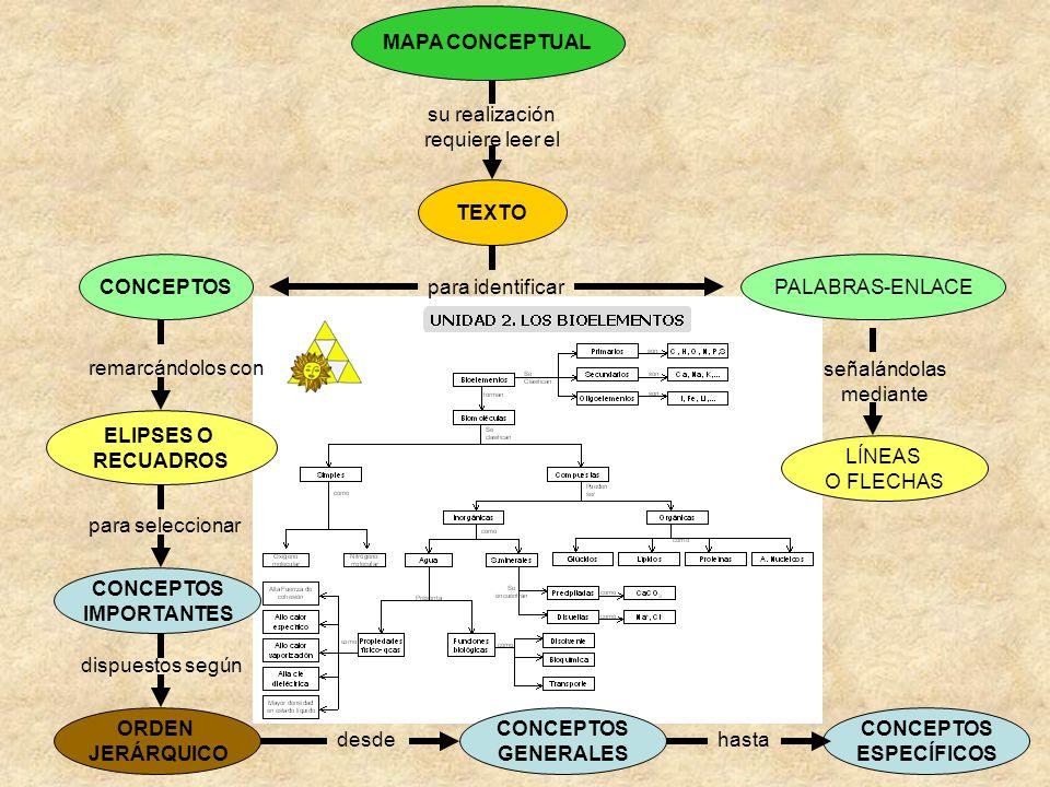 MAPA CONCEPTUAL su realización requiere leer el TEXTO para identificar PALABRAS-ENLACECONCEPTOS remarcándolos con ELIPSES O RECUADROS para seleccionar