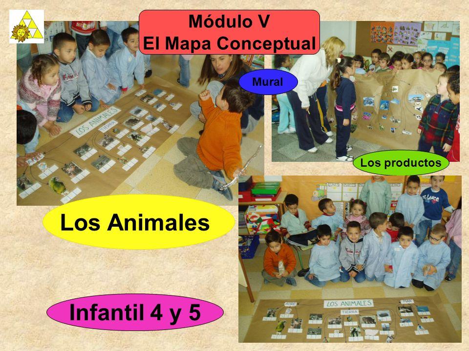 Infantil 4 y 5 Módulo V El Mapa Conceptual Mural Los Animales Los productos