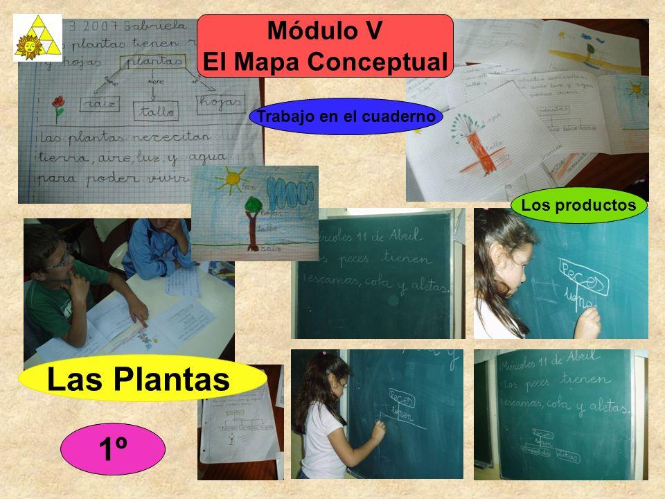 1º Módulo V El Mapa Conceptual Trabajo en el cuaderno Las Plantas Los productos