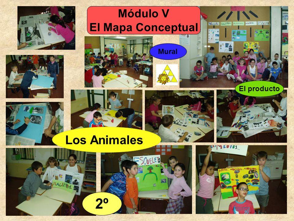 Módulo V El Mapa Conceptual El producto 2º Los Animales Mural