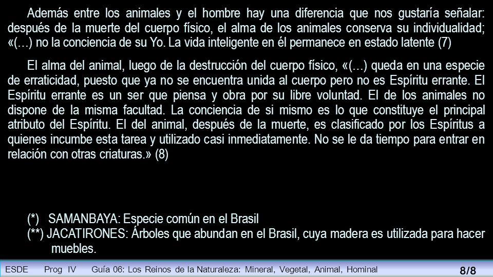 Además entre los animales y el hombre hay una diferencia que nos gustaría señalar: después de la muerte del cuerpo físico, el alma de los animales con