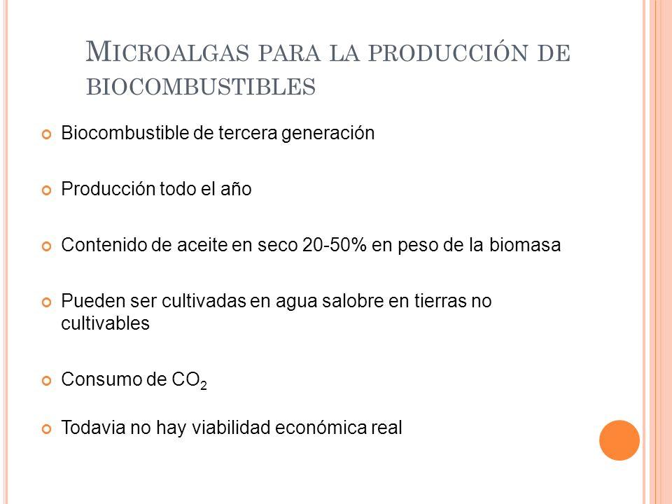 M ICROALGAS PARA LA PRODUCCIÓN DE BIOCOMBUSTIBLES Biocombustible de tercera generación Producción todo el año Contenido de aceite en seco 20-50% en pe