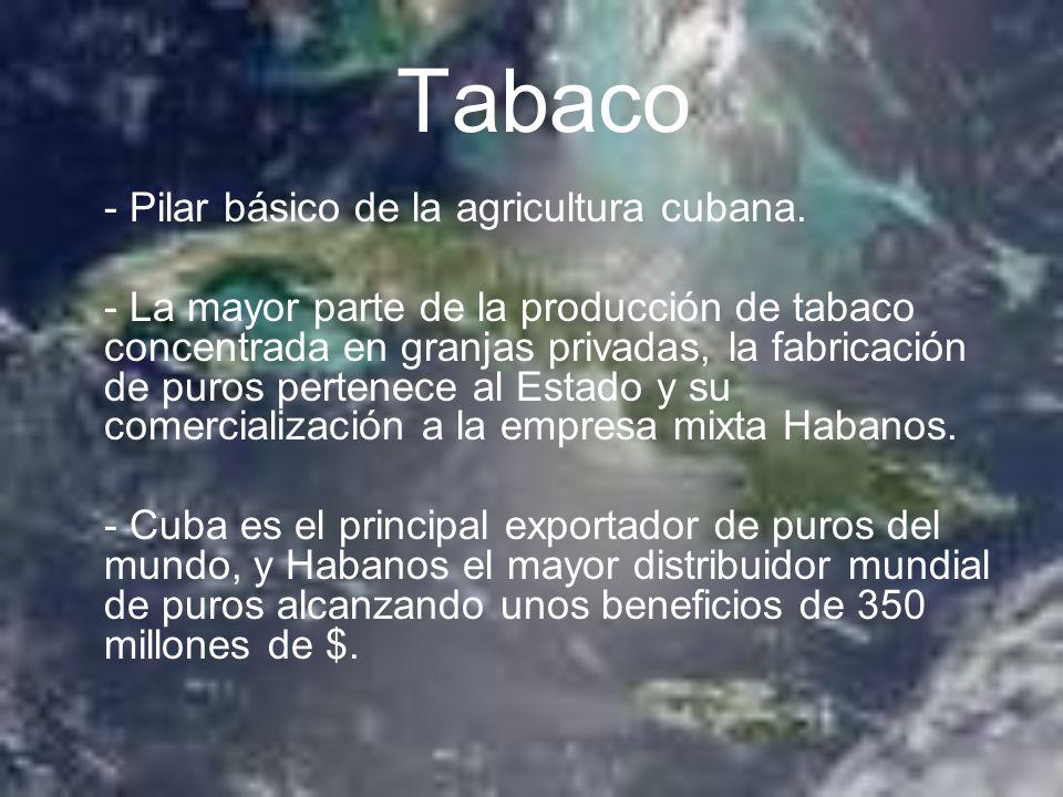 Tabaco - Pilar básico de la agricultura cubana. - La mayor parte de la producción de tabaco concentrada en granjas privadas, la fabricación de puros p