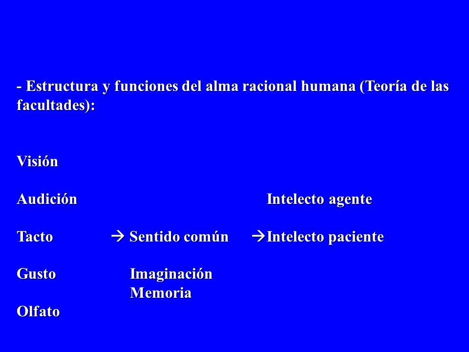 - Estructura y funciones del alma racional humana (Teoría de las facultades): Visión Audición Intelecto agente Tacto Sentido común Intelecto paciente