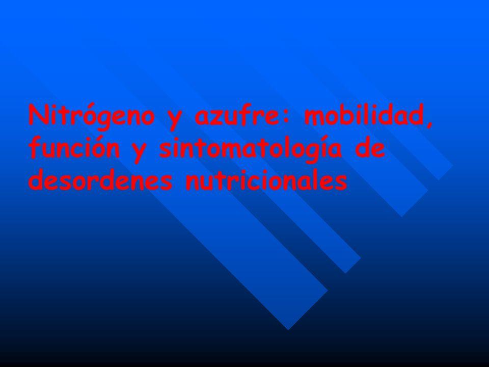 Nitrógeno Absorción, transporte y redistribuición Formas de N en el crecimiento del feijoeiro (Verennes)