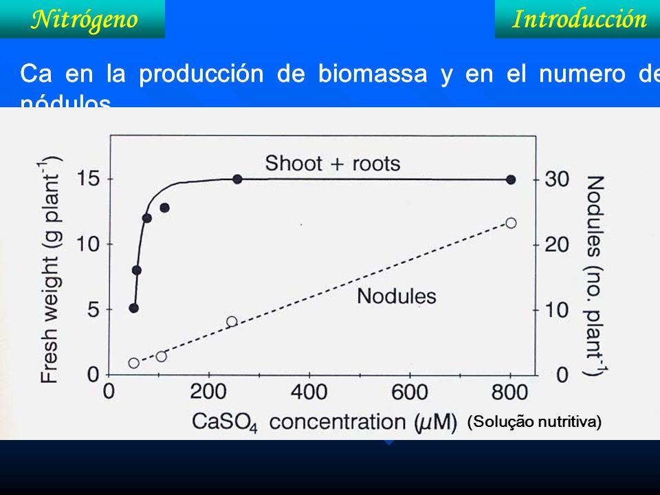 IntroducciónNitrógeno Ca en la producción de biomassa y en el numero de nódulos (Solução nutritiva)