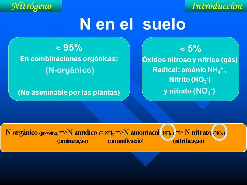IntroduccíonNitrógeno N en el suelo 5% Óxidos nitroso y nítrico (gás) Radical: amônio NH 4 +, Nitrito (NO 2 - ) y nitrato (NO 3 - ) 95% En combinacion