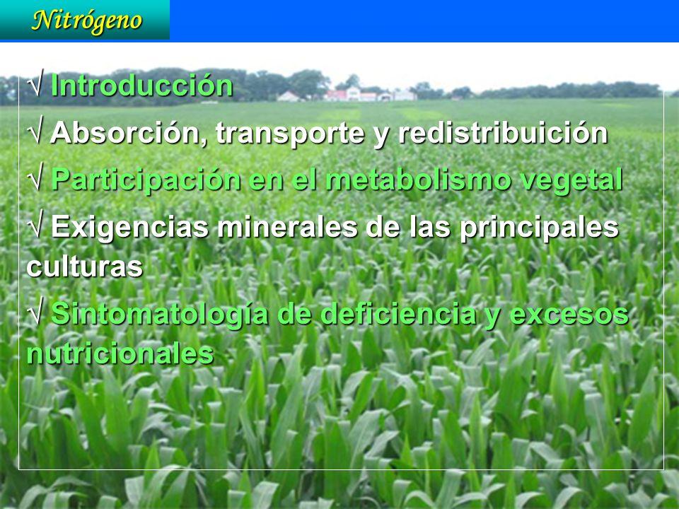 Nitrógeno Introducción Introducción Absorción, transporte y redistribuición Absorción, transporte y redistribuición Participación en el metabolismo ve