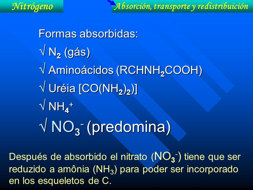 Formas absorbidas: N 2 (gás) N 2 (gás) Aminoácidos (RCHNH 2 COOH) Aminoácidos (RCHNH 2 COOH) Uréia [CO(NH 2 ) 2 )] Uréia [CO(NH 2 ) 2 )] NH 4 + NH 4 +
