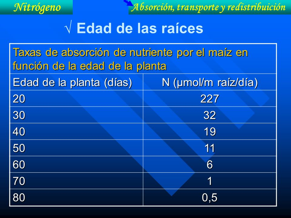 Taxas de absorción de nutriente por el maíz en función de la edad de la planta Edad de la planta (días) N (µmol/m raíz/día) 20227 3032 4019 5011 606 7