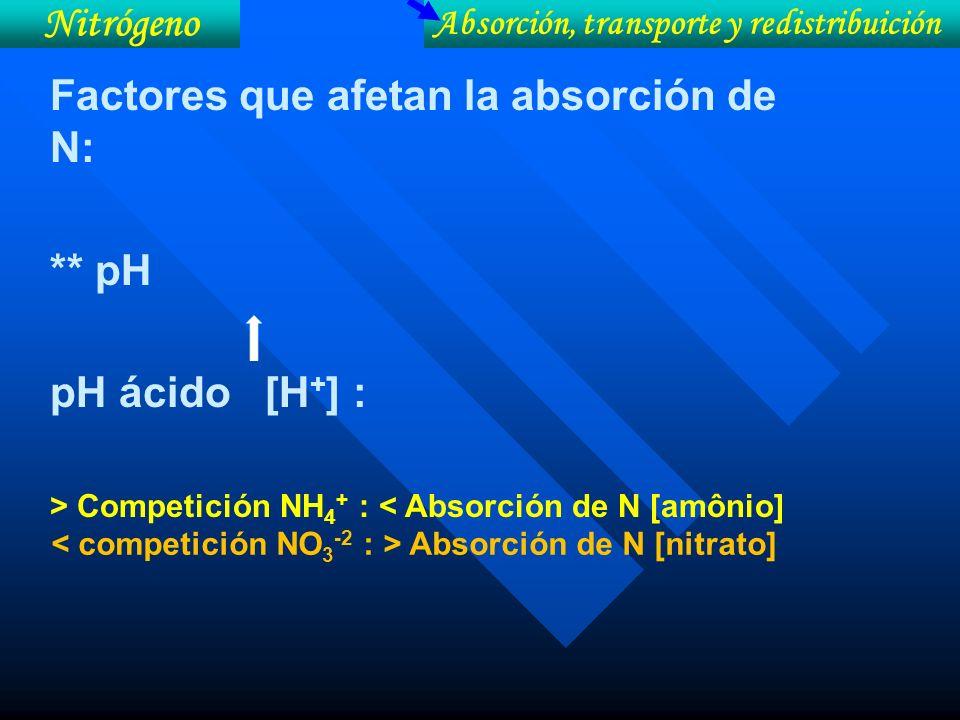 Absorción, transporte y redistribuición Nitrógeno Factores que afetan la absorción de N: ** pH pH ácido [H + ] : > Competición NH 4 + : < Absorción de