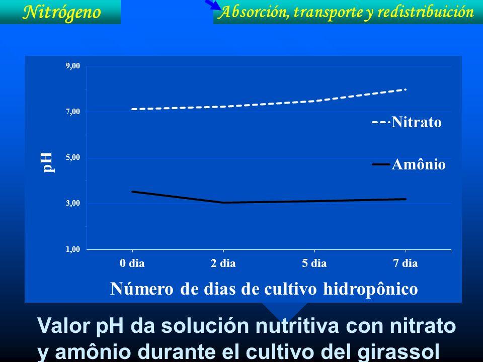 Absorción, transporte y redistribuición Nitrógeno Valor pH da solución nutritiva con nitrato y amônio durante el cultivo del girassol