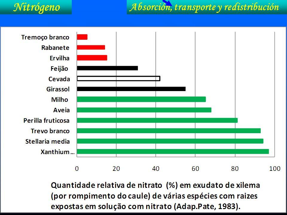 Nitrógeno Absorción, transporte y redistribución