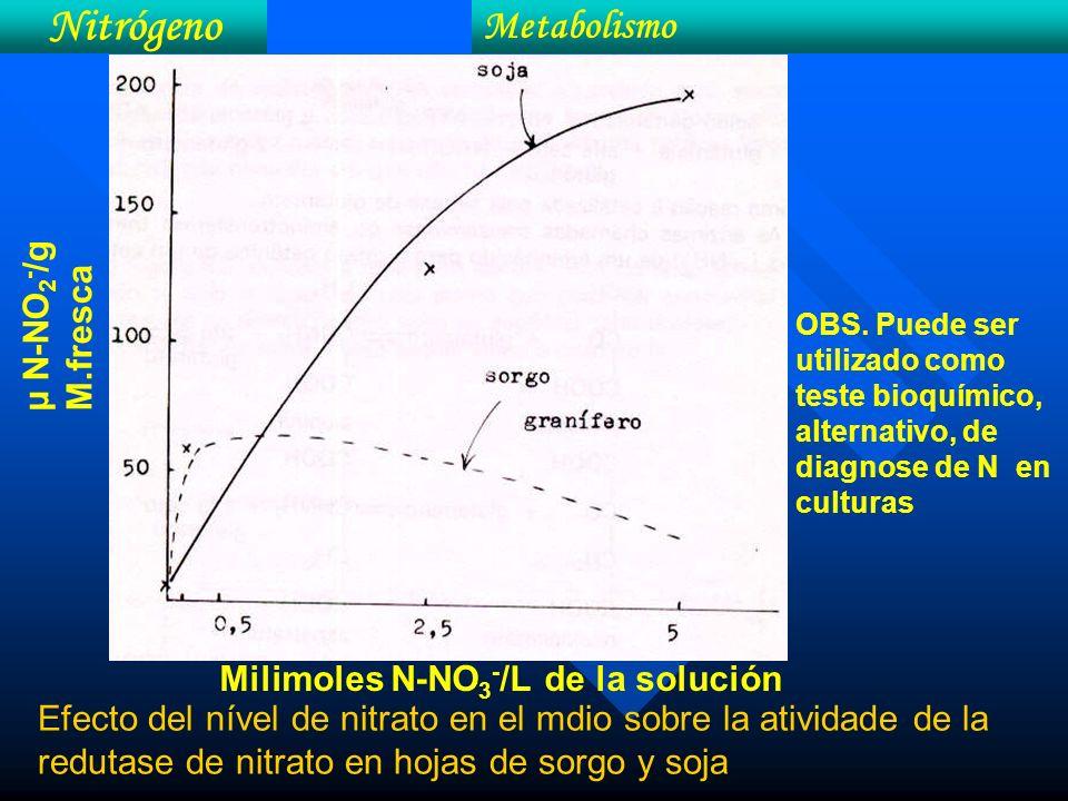 Efecto del nível de nitrato en el mdio sobre la atividade de la redutase de nitrato en hojas de sorgo y soja Milimoles N-NO 3 - /L de la solución OBS.