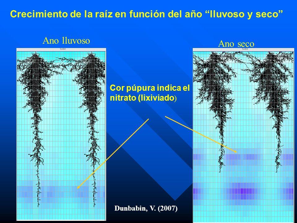 Ano lluvoso Ano seco Dunbabin, V. (2007) Crecimiento de la raíz en función del año lluvoso y seco Cor púpura indica el nitrato (lixiviado )