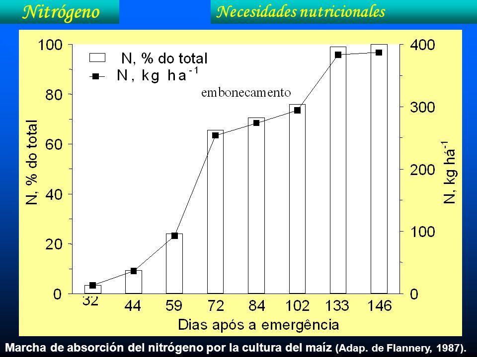 Nitrógeno Necesidades nutricionales Marcha de absorción del nitrógeno por la cultura del maíz (Adap. de Flannery, 1987).